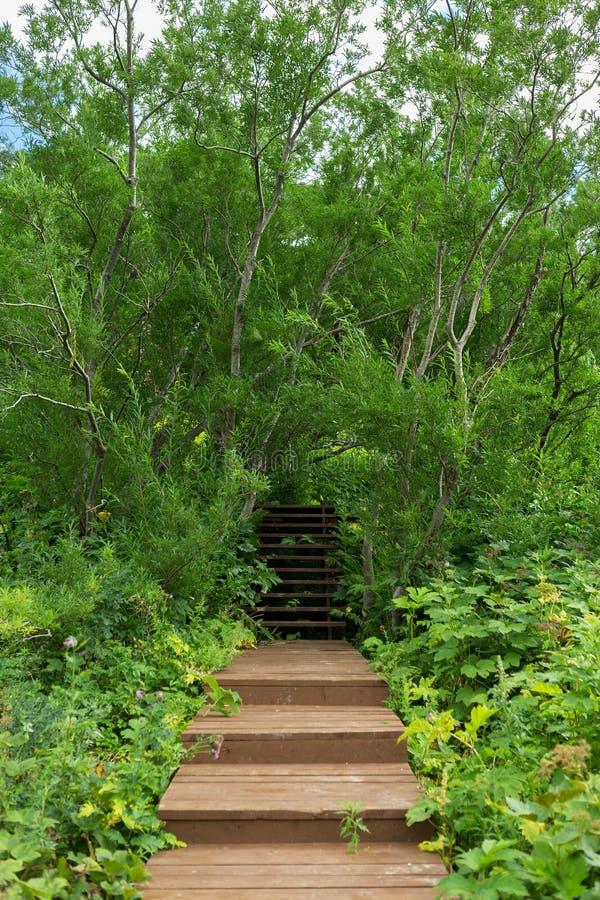 在喷泉谷的木足迹  库存照片