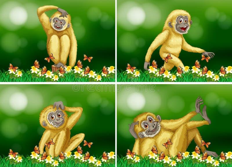 在四个场面的逗人喜爱的长臂猿 皇族释放例证