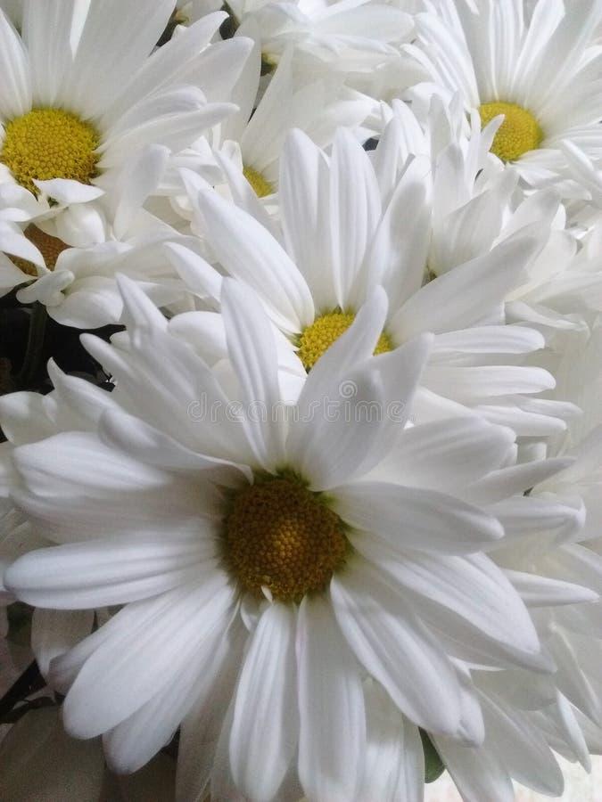 在四周冷的ligth的白色黄色自然花 库存照片