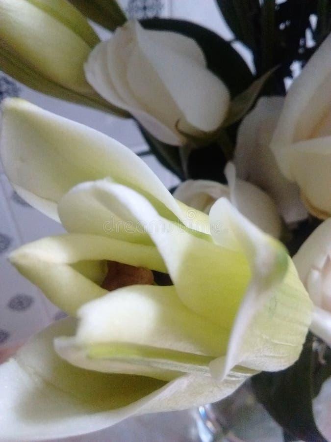 在四周冷的ligth的白色黄色自然花 免版税库存图片