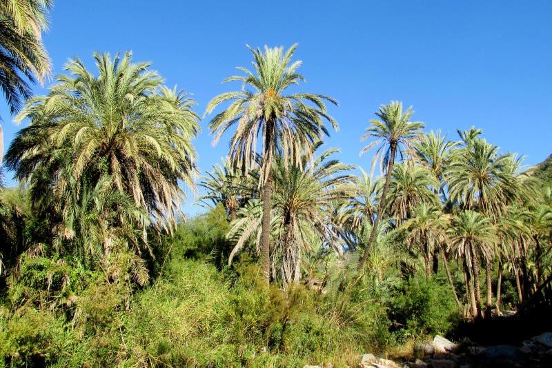 在回归线的棕榈树 免版税库存图片