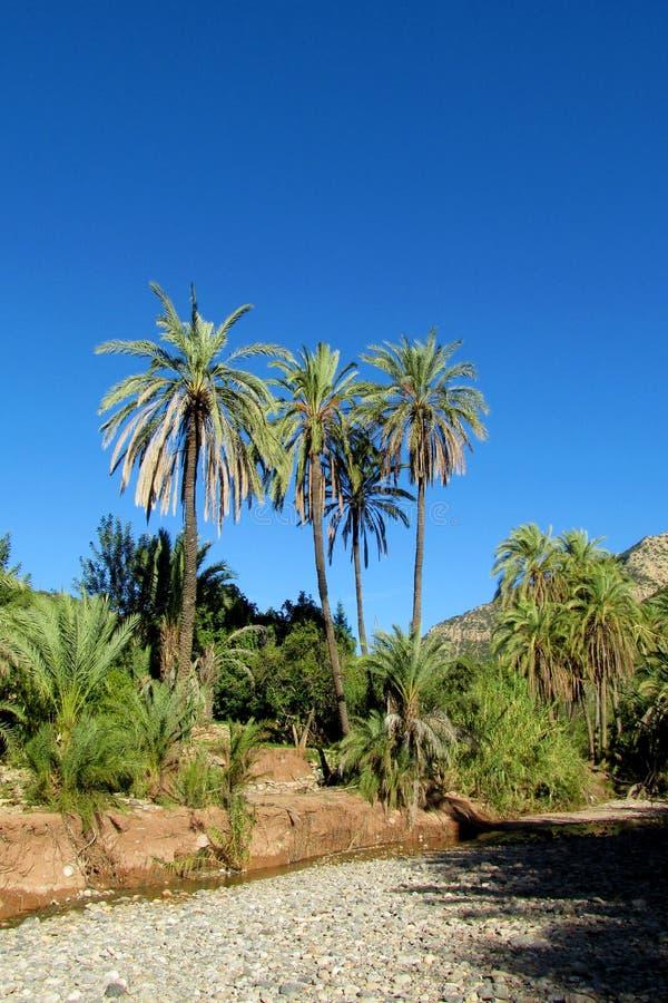 在回归线的棕榈树 免版税库存照片