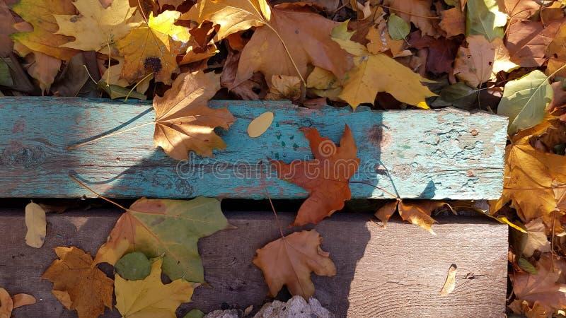 在困厄的木板条上面的枫叶 免版税库存图片