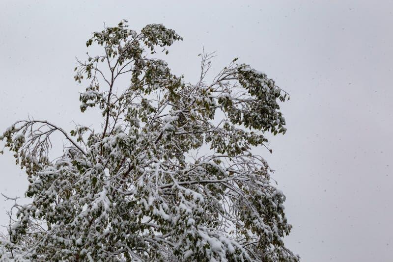 在围困下的邻里:2018个冬天季节第一雪在奥马哈内布拉斯加美国 图库摄影