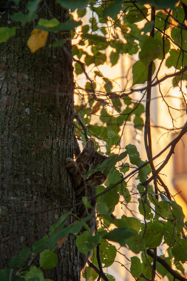 在围拢在秋叶之前的树的猫 库存照片