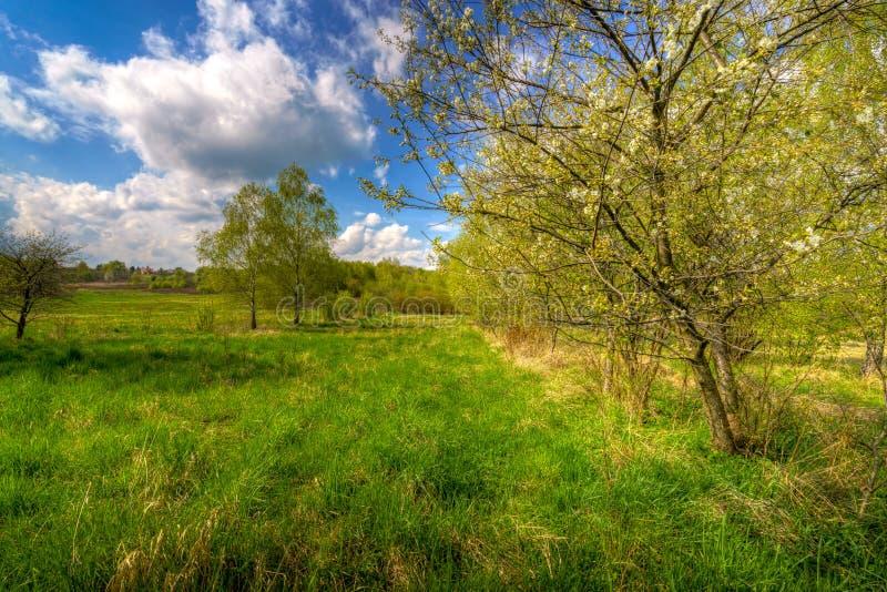 在国家领域的春天树 库存照片