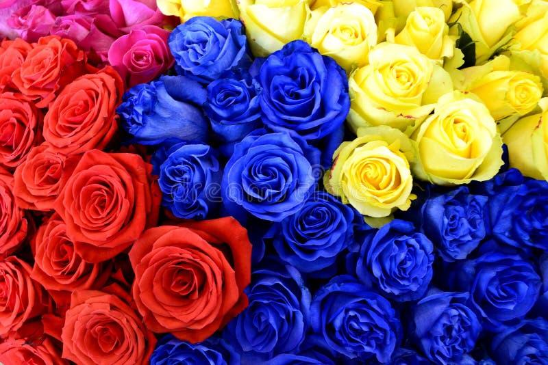 在国际花的不同的色的玫瑰 库存照片