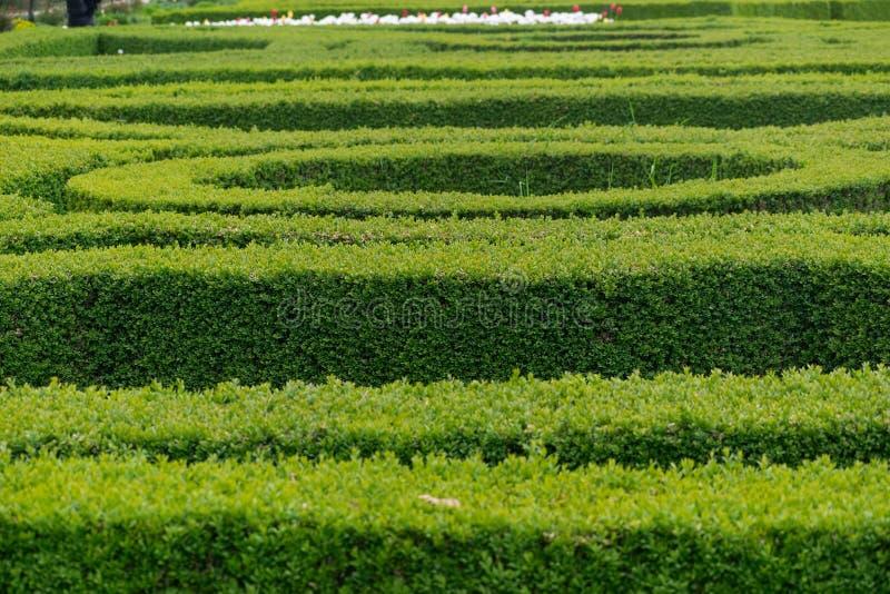 在圆和平直的形状的绿色树篱 库存照片