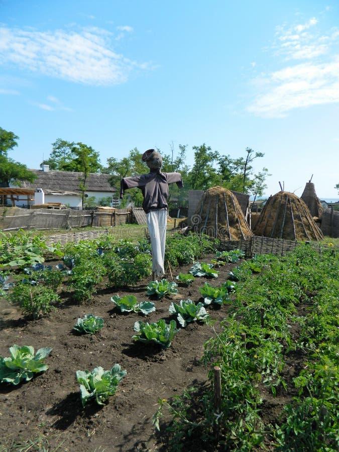在圆白菜和蕃茄中的庭院里陈列的稻草人 免版税库存图片