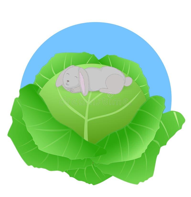 在圆白菜的兔子 库存图片