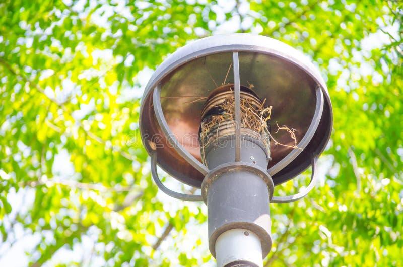 在圆的形状的街灯的鸟巢在庭院里 库存照片
