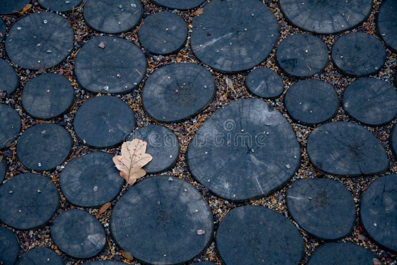 在圆的木材片断做的木背景的唯一橡木叶子 树桩的黑暗的木横断面 破裂的表面顶视图  免版税图库摄影