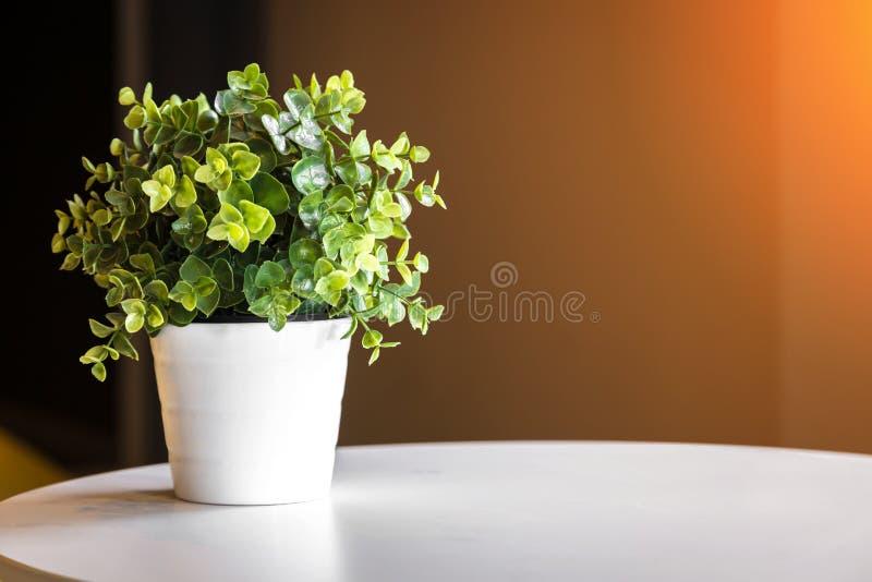 在圆的白色桌上的花盆装饰 库存图片