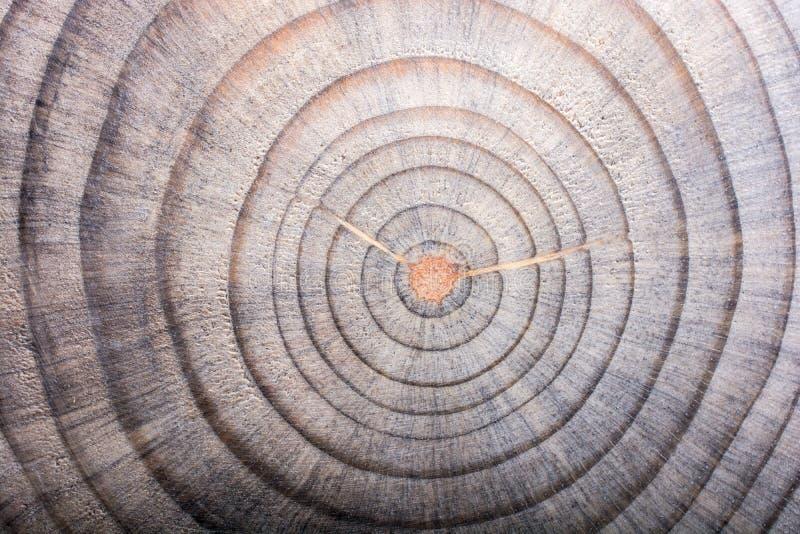 在圆的稀薄的片断切开的木日志 免版税库存图片