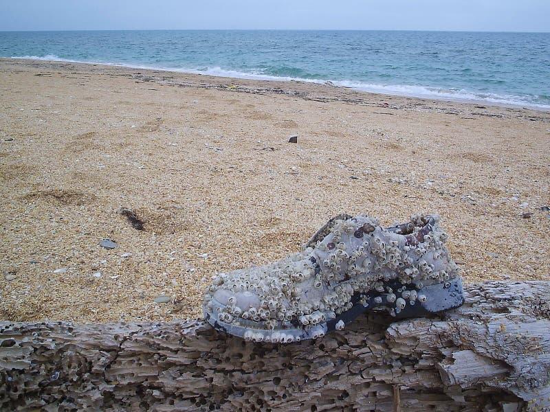 在圆这海洋旅行以后的一条鞋子小船 库存图片
