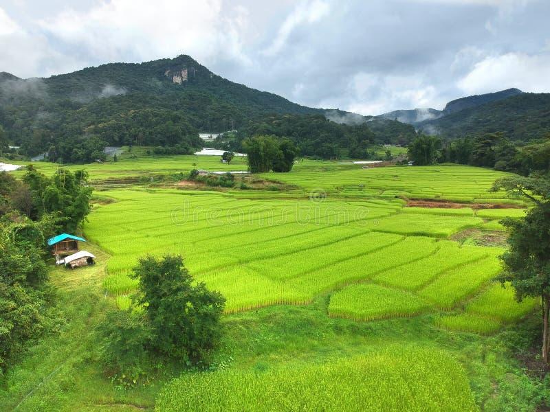 在土井Inthanon国家公园Chom皮带区清迈府,俯视图的泰国的米大阳台 免版税库存照片