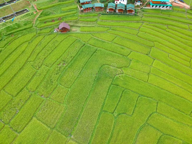 在土井Inthanon国家公园Chom皮带区清迈府,俯视图的泰国的米大阳台 图库摄影