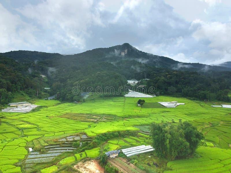 在土井Inthanon国家公园Chom皮带区清迈府,俯视图的泰国的米大阳台 库存图片
