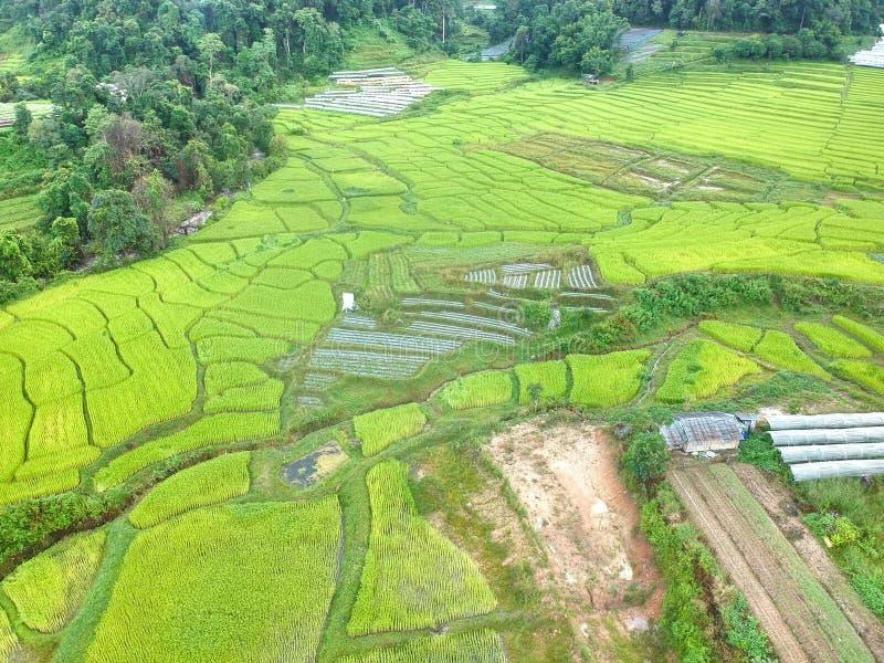 在土井Inthanon国家公园Chom皮带区清迈府,俯视图的泰国的米大阳台 库存照片