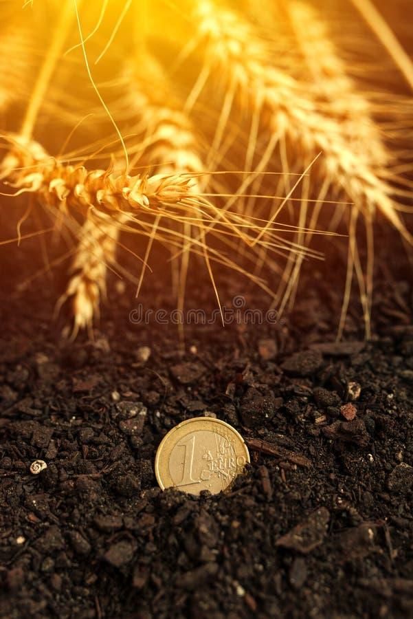 在土壤和被收获的麦子耳朵的一枚欧洲硬币 免版税库存照片