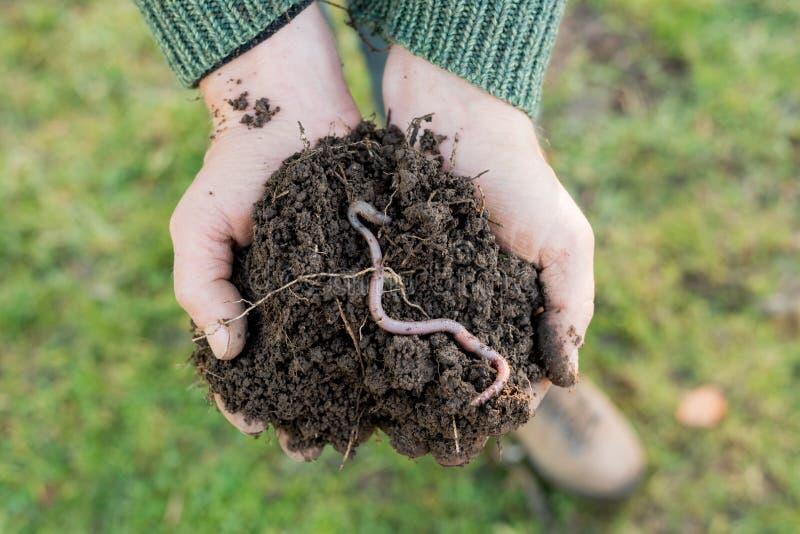 在土壤堆的蚯蚓在手上的 库存图片