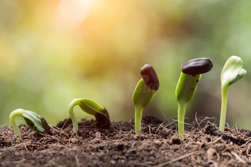 在土壤春季的种子根 免版税库存照片