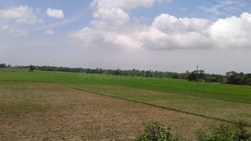在土壤的增长的新芽 库存图片