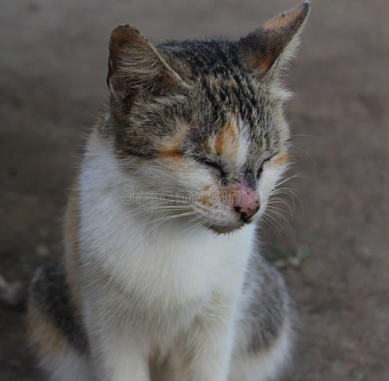 在土壤的布朗白色猫 图库摄影