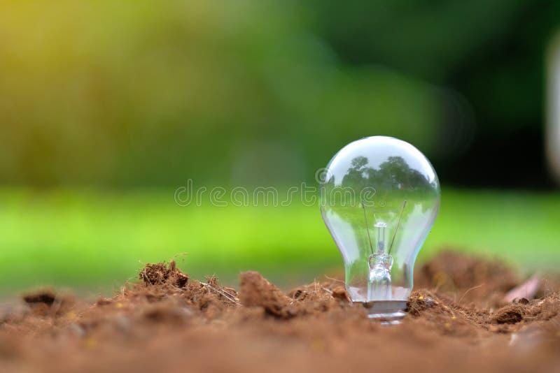 在土壤的电灯泡有绿色背景 免版税库存照片