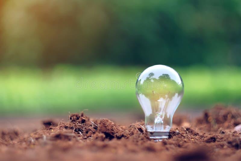 在土壤的电灯泡有绿色背景 免版税图库摄影