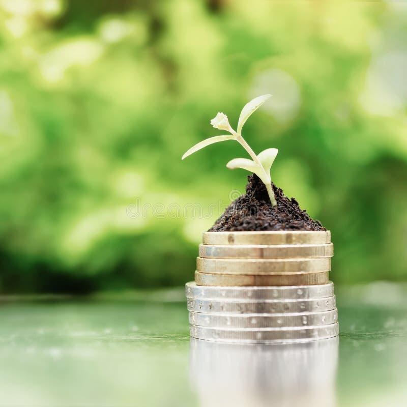 在土壤的硬币与绿色背景的年幼植物 现金上涨概念 高关键过滤器 免版税库存照片