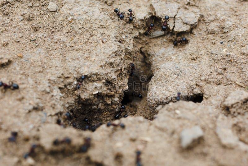 在土壤的蚁丘 图库摄影