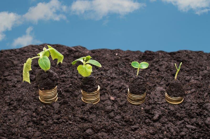 在土壤的金黄硬币与天空背景的年幼植物 现金上涨概念 免版税库存照片