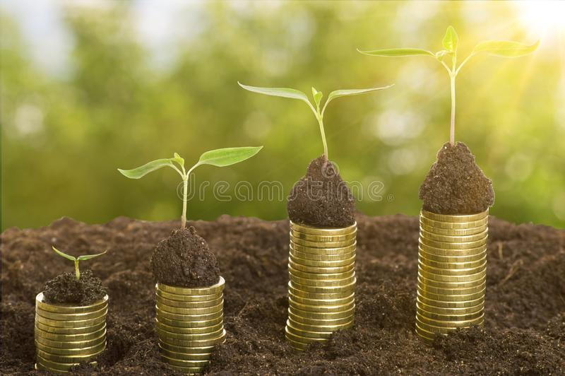 在土壤的金黄硬币与年幼植物和太阳的光芒 现金上涨概念 库存图片