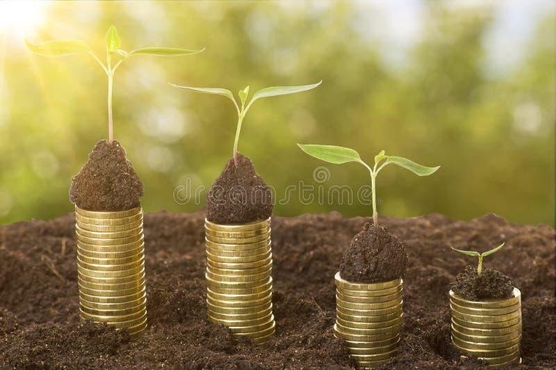 在土壤的金黄硬币与年幼植物和太阳的光芒 现金上涨概念 库存照片