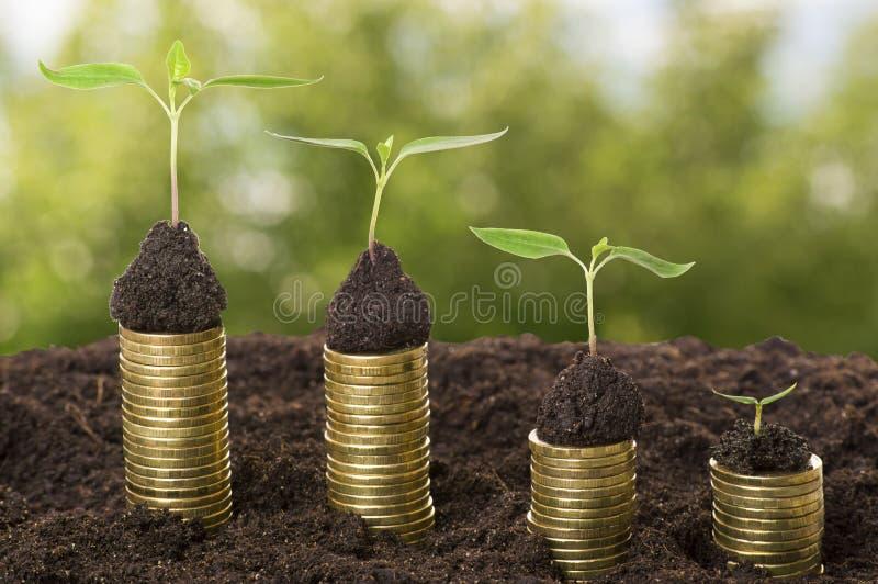 在土壤的金黄硬币与年幼植物 现金上涨概念 免版税图库摄影