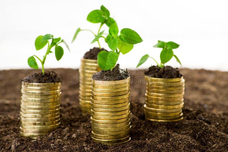 在土壤的金黄硬币与年幼植物 库存照片