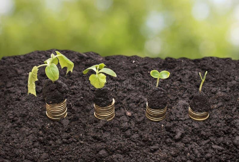 在土壤的金黄硬币与绿色背景的年幼植物 现金上涨概念 库存图片