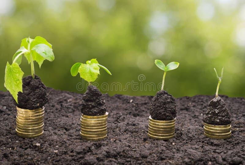 在土壤的金黄硬币与被隔绝的年幼植物 发单美元草绿色生长增长一百货币一 免版税库存照片
