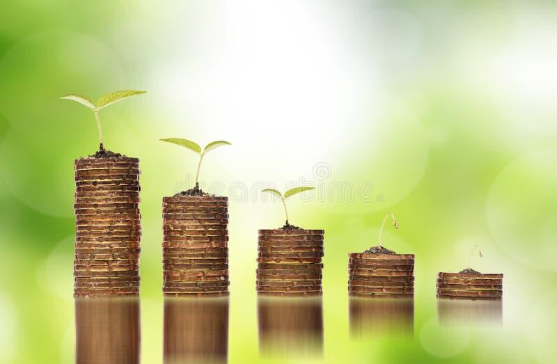 在土壤的金黄硬币与显示对金融投资危机的年幼植物 库存图片