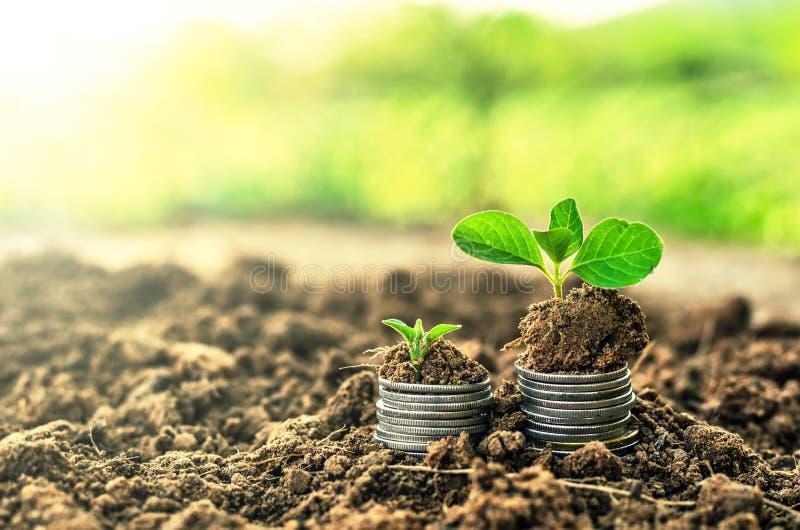 在土壤的金黄硬币与年幼植物 现金上涨概念 库存图片