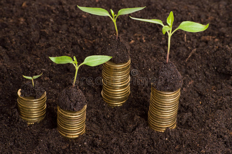在土壤的金黄硬币与年幼植物 现金上涨概念 免版税库存照片