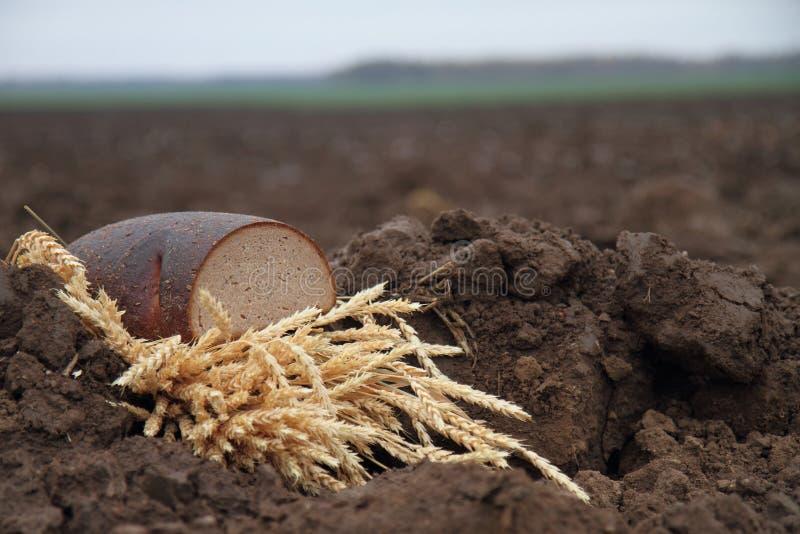 在土壤的面包 库存图片