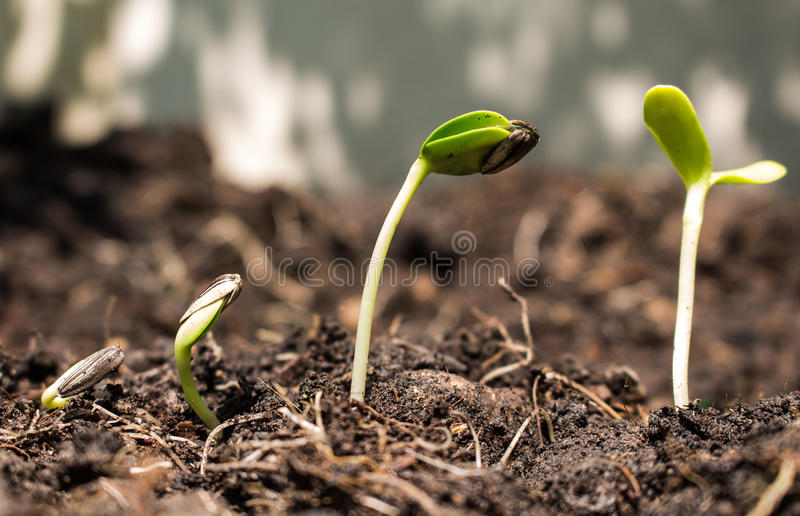 在土壤-新的生活概念的种子 图库摄影