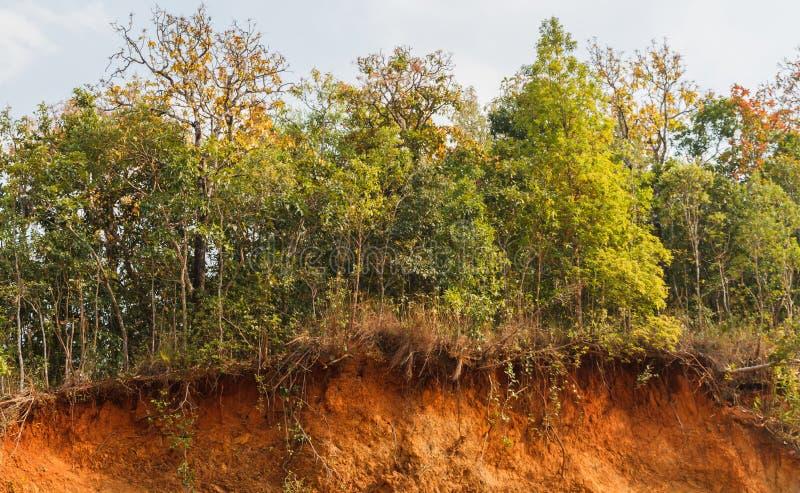 在土壤幻灯片的树 免版税图库摄影