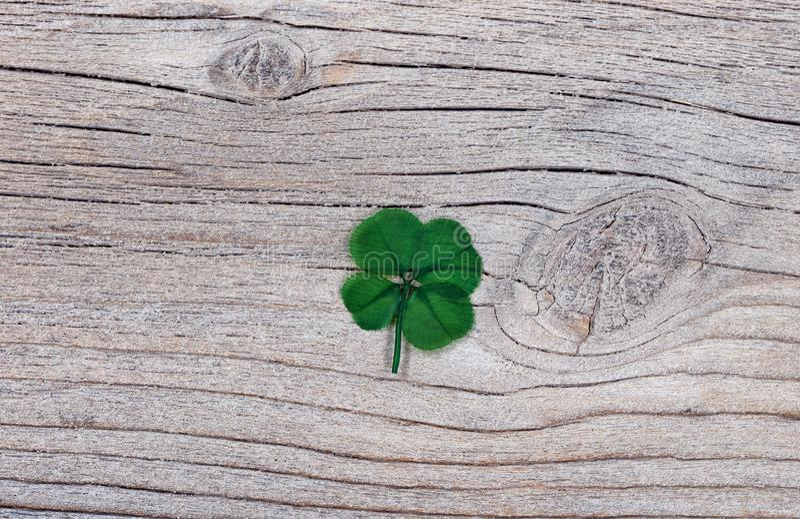 在土气木头的真正的四片叶子三叶草 库存照片