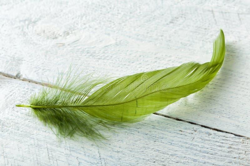 在土气木头的绿色羽毛 库存照片