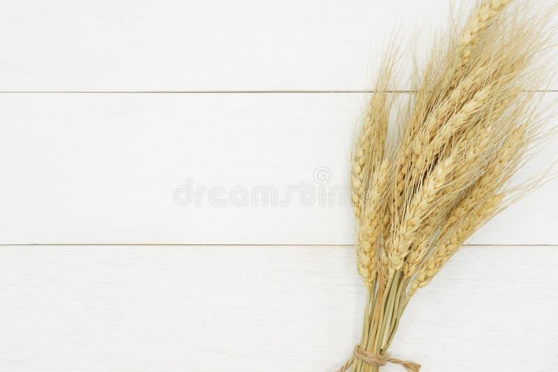 在土气白色木板条背景的自然干麦子束 免版税库存照片