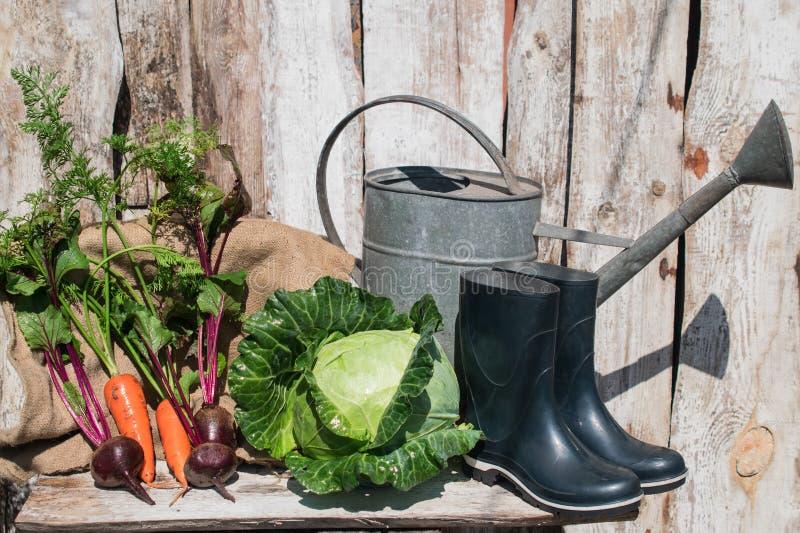 在土气背景的新鲜和健康有机蔬菜 图库摄影