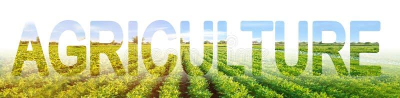 在土豆种植园的背景的题字农业 传统种田 使用现代集成的解决方案 库存照片